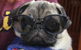 Óculos de sol de má qualidade prejudica a visão?