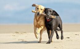 Seu cão é sociável?