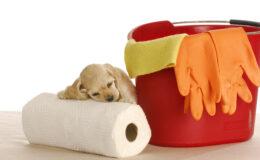 Seu cão pode fazer xixi quando você pede, sabia?