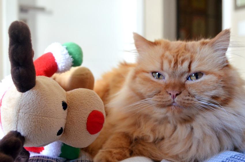 lucy e rudolf decorando para o natal abc de beleza e eai beleza