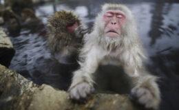 Melhores fotos de animais de 2014 (Reuters)