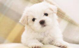 O seu cão tem habilidades sociais?