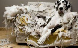 Meu cão destrói tudo! E agora?