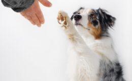 Necessidades básicas dos cães, você sabe quais são?