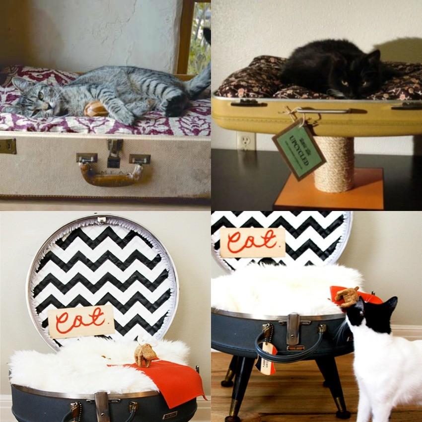 mala na decoracao e cama de gato