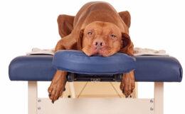 Massagem em cães, você conhece?