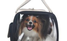 Vai viajar? Leve seu cãozinho também