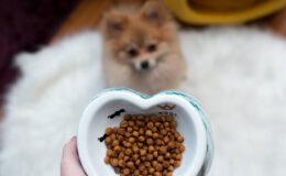 Seu cachorro é o que ele come