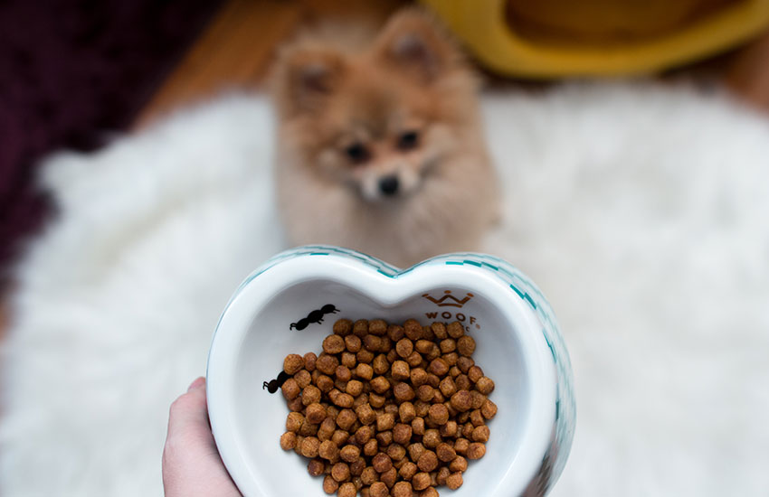 alimentacao-canina (1)