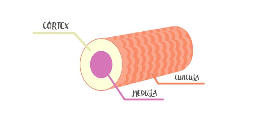 estrutura-de-um-fio-de-cabelo