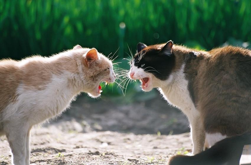 Como introduzir um novo gato em casa
