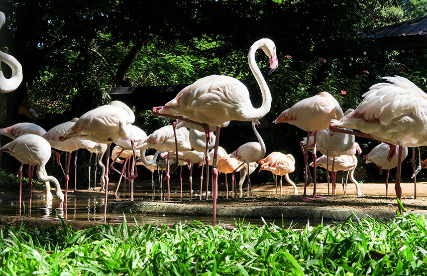 parque-das-aves-foz-do-iguaçu-1