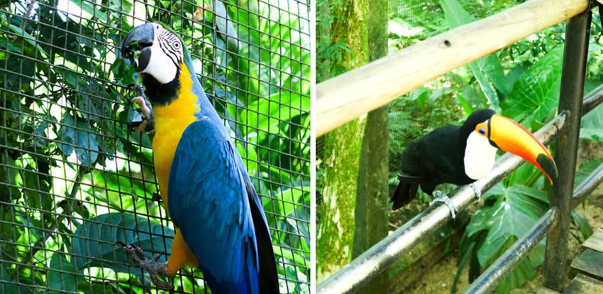 parque-das-aves-foz-do-iguaçu-3