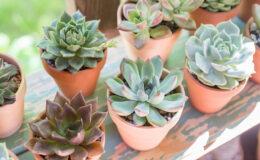 Como fazer (e manter) um jardim de suculentas em casa?