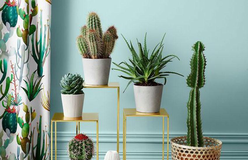 decorando-sua-casa-com-cactos